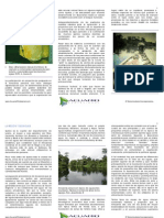 proyecto de desarrollo de pesca ornamental