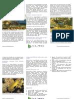 siete especies gobios para acuario de arrecife