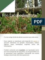 apresentação botânicasss
