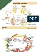 ciclos biologia