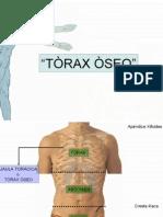 Torax_osteomuscular[1]