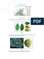 5 Medicinal Plants