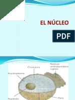 El Nucleo (Biologia)