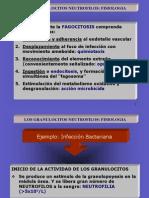 1-8-Los-granulocitos-y-sus-funciones-(Tema-7) (1)