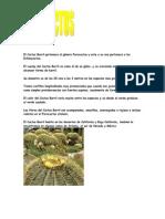 Cactus14_Aarón