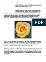 The Ancient History of Rose Plants - Floribunda, Grandiflora, Hybrid Tea and Polyantha Roses – Part 1