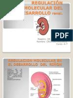 Regulacion de Aparato Urinario