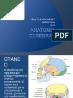 Anatomia Cerebral Ped