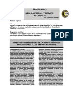 81767630 Practica Medula Espinal Feb 2012