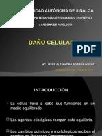 Clase Daño Celular Borboa