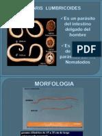 eparasitologia