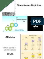 Tercera Clase Biomoléculas Orgánicas I 2012 BIO 038