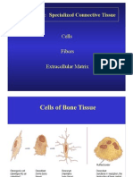 Bone Tissues 1
