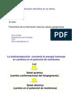 Clase F85-Transduccion Sensitiva en La Retina