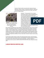 Biopori IPB - Copy