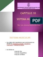 sistemamuscularembrio-100114114119-phpapp01