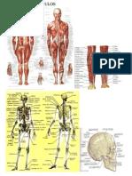 Muscolos y Huesos