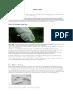 Bio Battery Report