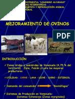 MEJORAMIENTO DE OVINOS
