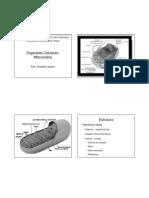 Aula 7 Organelas Celulares Mitocondria
