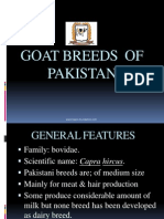 Goat Breeds of Pakistan