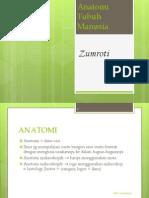 Anatomi Fisiologi Smk Kes