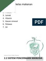 Chapter 2.3 Sistem Pencernaan Manusia