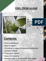 91-Biodiesel From Algae