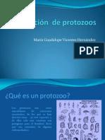 Nomenclatura de protozoos