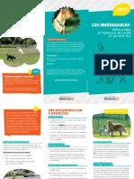 Plateau-Mont Royal dog regulations