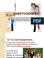 2-Gametogenesis