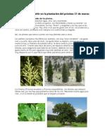 Plantación_día_del_árbol_21_3_12