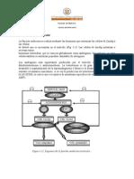 funcion_endocrina_y_ciclo_menstrual (1)