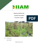 Relatório de Estudo de solos Associ.Thomas Sankara
