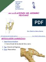 ARTICULACIONES MIEMBRO PELVICO