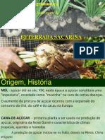 CA_II_Beterraba2011