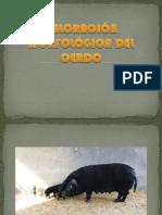 porcinometría