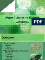 Algae Cultures to Biofuels