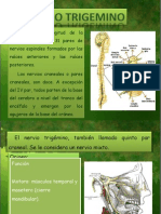 nerviotrigemino-090714200417-phpapp01