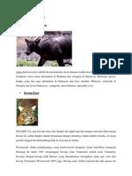 Hewan dan Tumbuhan Langkah