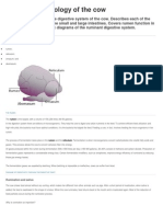 Digestive Physiology of the Cow