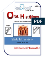 the Most Important Slides of Oral Histo Lab for the 1st 7 Labs
