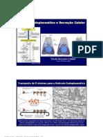 Microsoft Power Point - 06-Trafego Proteinas Reticuloendoplasm 2006