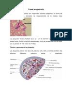 Línea plaquetaria