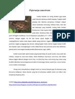 deskripsi amfibi