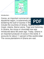 Cocoa Cultivation in Ghana