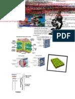 Rangkuman UTS 1 Bio IPB