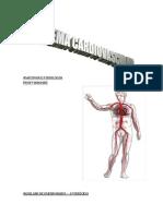 Trab escrito anatomia1
