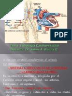 FISIOLOGIA CARDIOVANSCULAR