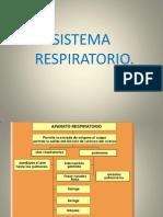elsistemarespiratorio03-111-101104175044-phpapp01